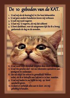 De 10 geboden van een kat ...