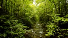 green landscapes nature trees forest rivers 1920x1080 wallpaper_www.wallmay.com_49.jpg (800×450)