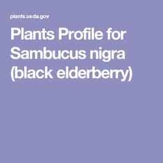 Plants Profile for Sambucus nigra (black elderberry)