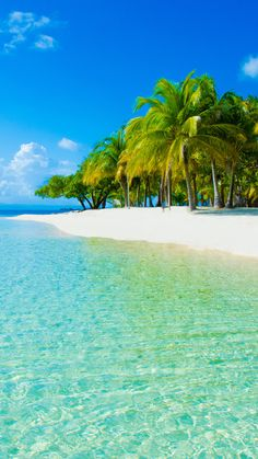 clouds, beach, the sky, sand, sea, nature, palm trees photo