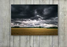 Landscape Photography of Rye Field Under Dark Clouds
