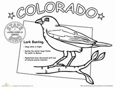Colorados State Bird Is The Lark Bunting And You Can Learn All About It With This Coloring Page
