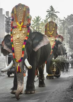 Holy Beast - Elephants in Kerala Culture Elephant India, Colorful Elephant, Indian Elephant, Elephant Love, Beautiful Creatures, Animals Beautiful, Cute Animals, Indian Culture And Tradition, Elephant Photography