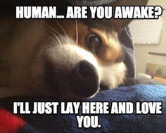 Funny Animal Pictures - View our collection of cute and funny pet videos and pics. New funny animal pictures and videos submitted daily. I Love Dogs, Puppy Love, Cute Dogs, Funny Animal Pictures, Funny Animals, Cute Animals, Meme Pictures, Tier Fotos, Dog Memes