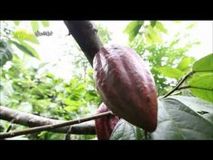 Travel the world - Jo Yeo-jeong, Indonesia(4) #01, Sumatra and jungle entrance to, 조여정, 인 - YouTube