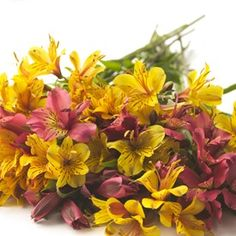Looking for something affordable, attractive and long-lasting? Alstroemeria is the flower for you! Alstroemeria is commonly known as 'Tiger Lilies' and is available year-round in many different colors.  Alstroemeria is long-lasting, hardy and can frequently be found in bouquets and arrangements of wedding flowers.