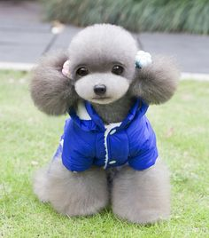 Warm Autumn Winter Coat Jacket  http://dld.bz/eS8QV