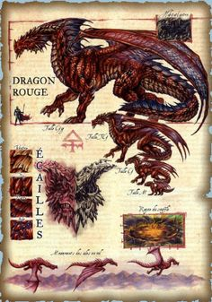 Dragon rouge Plus Dnd Dragons, Cool Dragons, Dungeons And Dragons, Fantasy Dragon, Fantasy Art, Fantasy Creatures, Mythical Creatures, Dragon Anatomy, Dragon Sketch