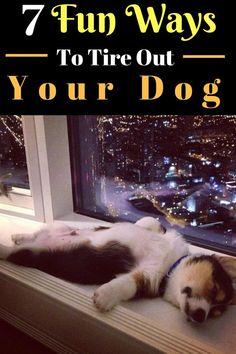 7 ways to tire out your dog. ways to tire out your puppy. tire out your dog toys tire out dog indoors Labrador Retriever, Golden Retriever, Labrador Puppies, Collie Puppies, Training Your Dog, Training Tips, Training Classes, Cute Puppies, Dogs And Puppies