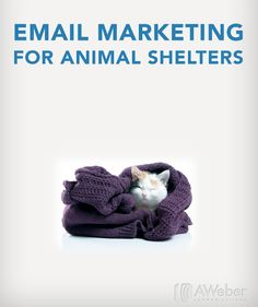 Email Marketing For Animal Shelters. To help you speak for the ones who can't. Here's how you can use email marketing to give your furry friends the help they deserve.