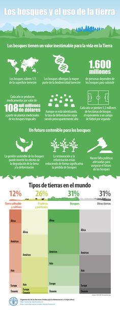 Los bosques y el uso de la tierra #infografia #infographic #medioambiente