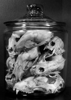 I have a ton of random animal bones...they'd look great in these apothecary style jars shelved with other essential kitchen ingredients...