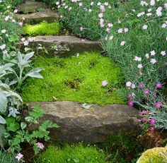 Lamb's Ear, Scotch Moss and Dianthus