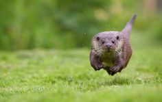 CHARGE! by Mark Bridger on 500px