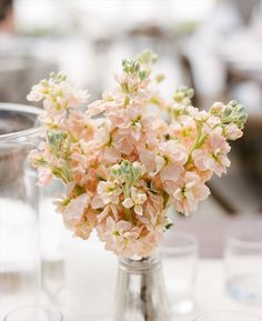 Peach stock flower will be used in the centerpieces. Floral Wedding, Wedding Bouquets, Wedding Flowers, Flower Decorations, Wedding Decorations, Apricot Wedding, Stock Flower, Design Floral, Peach Flowers