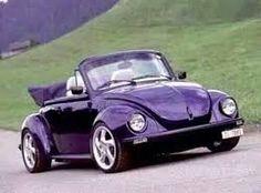 Purple bug