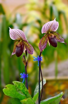"tinnacriss: "" Orchids by ATS TRAN on 500px """