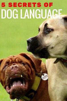 Reading dog signals and understanding dog body language is important for any pet parent. Learn the signs and what they mean in this post on the 5 Secrets of Doggie Language.