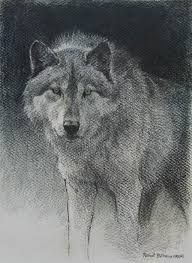 Znalezione obrazy dla zapytania wolf sketch