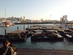 Sea lions of pier39