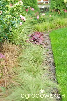Mój nowy stary ogród - strona 229 - Forum ogrodnicze - Ogrodowisko