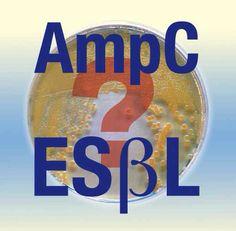 AmpC or ESBL?