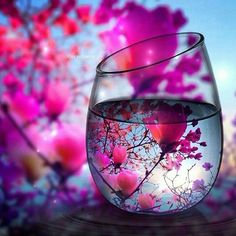 More amazing photos Glass Photography, Macro Photography, 5d Diamond Painting, Still Life Art, Love Photos, Amazing Photos, Amazing Nature, Wine Glass, Scenery