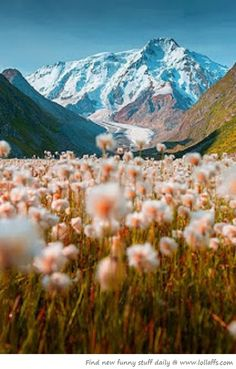 A mountain meadow in bloom, Tian Shan, Kyrgyzstan. The Tian Shan, is a large system of mountain ranges located in Central Asia. Tian Shan, Landscape Photography, Nature Photography, Travel Photography, Mountain Photography, Adventure Photography, Aesthetic Photography Nature, Photography Flowers, Summer Photography