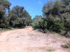Beautiful walk from Cala Galdana to Cala Macarella, Menorca.