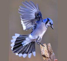 Gaie Bleu atterrit