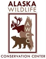 One of our favorite places ever is the Alaska Wildlife Conservation Center.