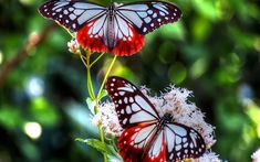 creative collection butterfly wallpaper for home. tips the 25 best butterfly wallpaper ideas on cool Papillon Butterfly, Butterfly Kisses, Butterfly Flowers, Butterfly Wall Art, Butterfly Wallpaper, Hd Wallpaper, Wallpaper Pictures, Butterfly Painting, Beautiful Bugs