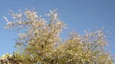 Signs of spring in Sicily