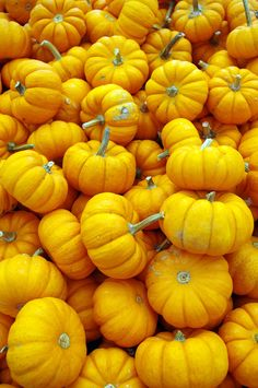 Plenty O' Pumpkins- Explore Getty Yellow Things yellow vegetables Yellow Aesthetic Pastel, Aesthetic Colors, Yellow Vegetables, Polychromos, Jaune Orange, Yellow Theme, Oranges And Lemons, Yellow Submarine, Backdrops