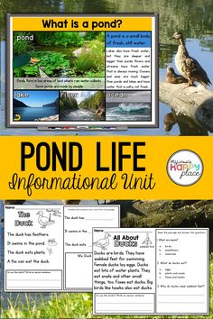 Pond Habitat Unit with PowerPoint What Is A Pond, Informational Writing, Nonfiction, Pond Habitat, Pond Animals, Teaching Themes, Pond Plants, Pond Life, Kindergarten Science