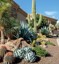 Desert landscaping is different than other styles of landscape designs because it requires the use of desert plants. Succulent Landscaping, Outdoor Landscaping, Front Yard Landscaping, Succulents Garden, Outdoor Gardens, Cactus Garden Ideas, Outdoor Cactus Garden, Arizona Landscaping, Driveway Landscaping