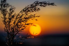 Fire Ball by Ovidiu Constantin DRON on 500px Fence, Projects To Try, Silhouette, Sunset, Grasses, Outdoor, Beautiful, Sea, Photos