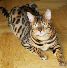 Tips på er som vill väga era katter - 00 - Allmänt kattprat - Katter iFokus