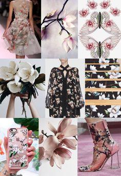 acero magnolia_cover