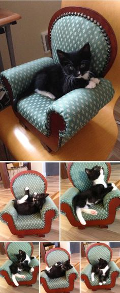 Literally Just A Bunch Of Photos Of Cats Sitting In Tiny Chairs