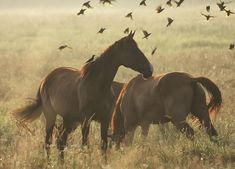 Wild Mustangs in Fall. All The Pretty Horses, Beautiful Horses, Animals Beautiful, Cute Animals, Baby Animals, Horses And Dogs, Wild Horses, Wild Mustangs, Horse Pictures
