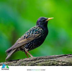 Renklerin güzelliği🥰❤ 🙏🦜🐦 #pethayat #pethayatcom #petshop #kuş #uçankuş #güzelkuş #renklikuş #muhabbetkuşu #yıldızparkı #gülhaneparkı #floryaatatürkormanı #zeytinburnutıbbibitkilerbahçesi #maçkaparkı #fethipasakorusu #fenerbahçeparkı #nezahatgökyiğitbotanikbahçesi #mihrabattabiatparkı #polonezköytabiatparkı #baltalimanıjaponbahçesi #göztepetabiatparkı #neşetsuyutabiatparkı #atatürkarboretumuparkormantabiatparkı #taksimgeziparkı #bakırköybotanikpark #fatihormanıtabiatparkı… Bird Facts, What Is A Bird, Animal Symbolism, Starling, Flocking, The Struts, Spirit Animal, Birds, Symbols
