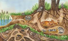 Forest School Activities, Autumn Activities, Science For Kids, Science And Nature, Futurism Art, Tree Of Life Art, Nocturnal Animals, Nature Drawing, Fairytale Art