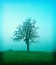 Madrona Hill by John Carleton