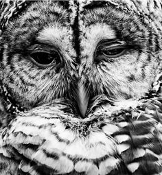 This owl has a deepness about him or her