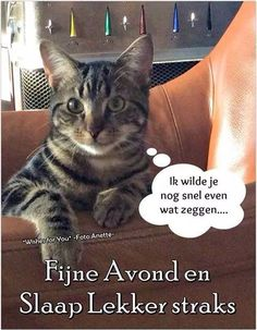 Nice evening and sleep wel Good Morning Good Night, Daily Pictures, Sweet Dreams, Slaap Lekker, Romance, Sayings, Cats, Dutch, Cartoons