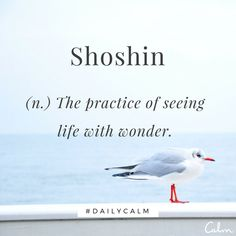 """Word for Today: Shoshin (n) The practice of seeing life with wonder. A word from Zen Buddhism which means """"beginner's mind"""". It refers to having an attitude of openness, eagerness, and lack of preconceptions when studying a subject, Unusual Words, Weird Words, Rare Words, Unique Words, New Words, Cool Words, Powerful Words, One Word Quotes, Now Quotes"""
