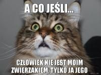 Właściciele kotów to znają. A co jeśli, człowiek nie jest moim... Cute Animal Memes, Cute Memes, Funny Animals, Funny Memes, Scary Funny, Wtf Funny, Funny Cute, Old Memes, Happy Photos