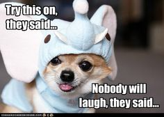 I Has A Hotdog - Page 9 - Loldogs n Cute Puppies - funny dog pictures - Cheezburger