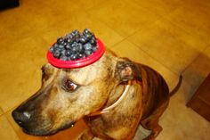foodonmydog.com too funny